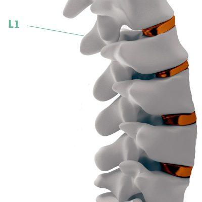 Coluna Vertebral L1