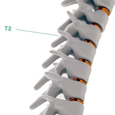 Coluna Vertebral T2