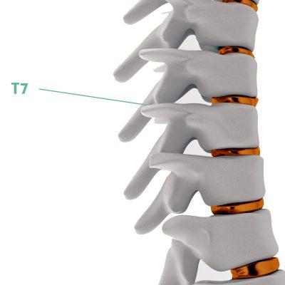 Coluna Vertebral T7