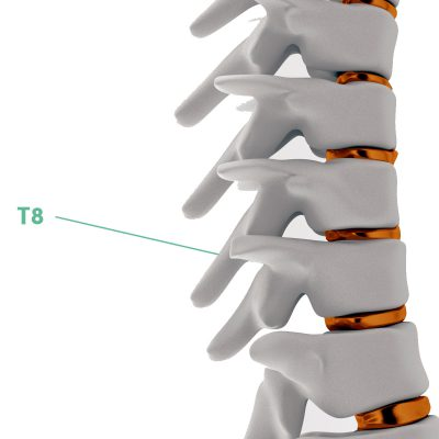 Coluna Vertebral T8
