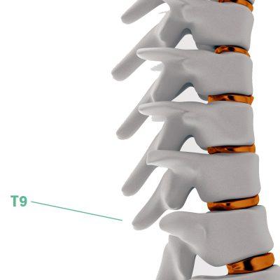 Coluna Vertebral T9